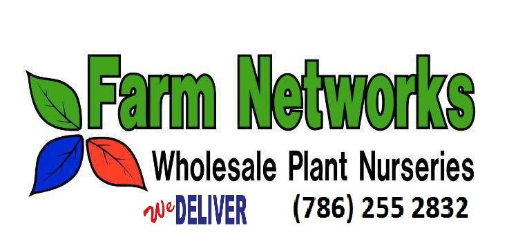 15-Gallon-Clusia-Wholesale Hedge Plants