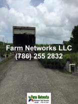 Florida foliage growers exporter