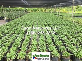 Florida Nursery Exporters