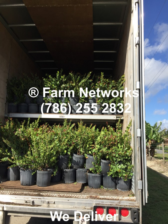 Homestead Florida Foliage Plant Exporters, Farm Networks LLC