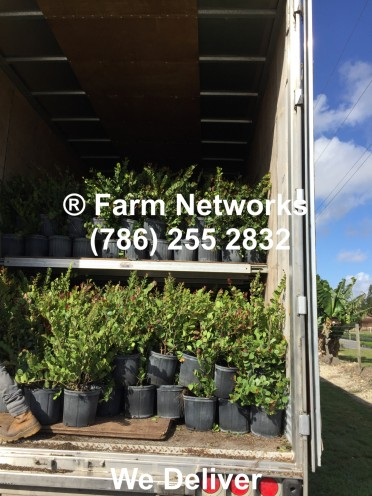 Plant Exporters in Homestead, FL
